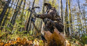 5 Foolproof Tips for Squirrel Hunting No One Told You
