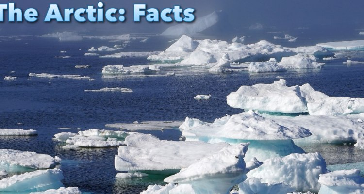 The Most Interesting Facts about the Arctic You Might Never Know