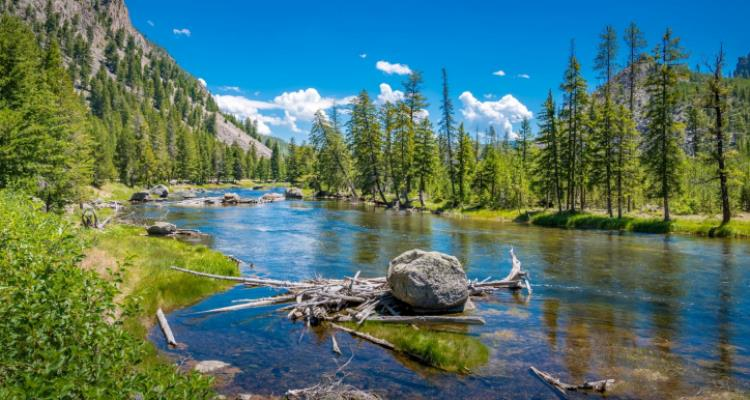 Yellowstone - Natural Wildlife Paradise