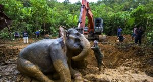 India's Efforts Save Elephants